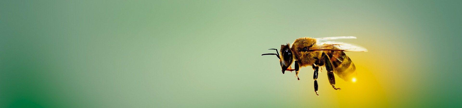 """Naturnahe Gärten für Bienen, Schmetterlinge und viele andere Insekten und Tiere sind das Ziel des Projekts """"NaturPflanzen"""". Wir wollen Jung und Alt für naturnahe Gärten mit heimischen Wildpflanzen begeistern. Mit unseren Projektpartnern wollen wir Netzwerke aufbauen und gemeinsam mit Gärtnereien und Pflanzenbetrieben mehr naturnahe Gärten in Deutschland zum Blühen bringen."""
